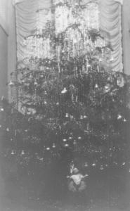 Albero Appartamento Pio XII - Archivio FSO - clicca per ingrandire